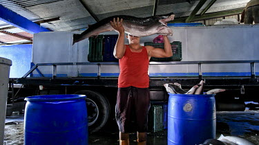 The shark fin industry removes 100 million sharks every year for soup, and more fins come from costa rica than any nation in the western hemisphere. Endangered Species,Ocean,Shark,Shark Fin Industry,Shark fin soup,fins,fish,fishermen,fishing,shark fins