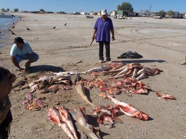 Cazon (small shark) fishery in Sonora, Mexico