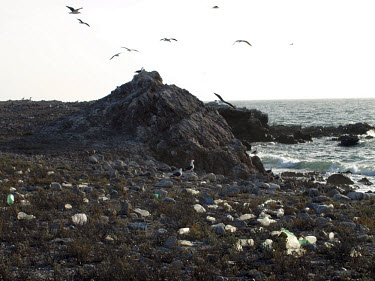 Isla Patos and the arriving trash and plastic debris.