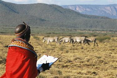 Samburu woman conservation scout monitoring Grevy's zebras Perissodactyla,Odd-toed Ungulates,Chordates,Chordata,Mammalia,Mammals,Equidae,Horses, Donkeys, Zebras,Appendix I,grevyi,Savannah,Terrestrial,Animalia,Equus,Semi-desert,Herbivorous,Africa,Endangered,IU