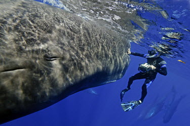 Whales are friendly and intelligent and should not be hunted.