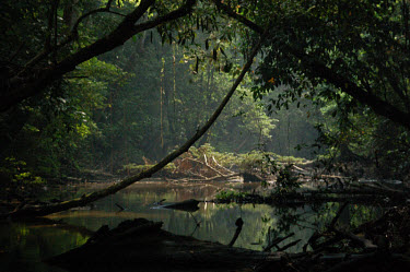 Jungle river wild places,wilderness,natural beauty,middle of nowhere,river,jungle,rainforest