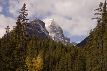 Canadian forest alpine forest,forests,woodland,pine forest,snow,snow capped mountain,pine