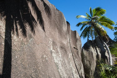 Coconut palm tree and shadow on granite boulder coconut tree,boulder,sky,palm,Indian Ocean Islands