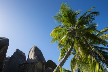 Coconut palm trees and granite boulders coconut tree,boulder,sky,palm,Indian Ocean Islands