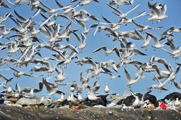 Fast and food wastfood,pollution,waste,dump,animals,birds,discarica,gabbiani,compactor