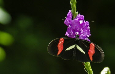 Butterfly on flower Butterfly,pretty,green,leaf,perching,insect,Odonata,flower,pollinator,Conservation