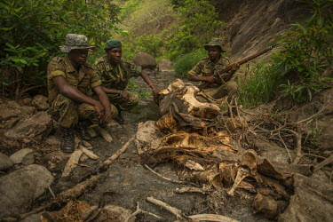 Antipoaching team around poached elephant Africa,ivory,poaching,skeleton,poacher,rangers,conservation threats,animal trade,illegal,conservation issue,death,crime,men,tusk,tusks,wildlife crime,wildlife trade,Elephants,Elephantidae,Chordates,Ch