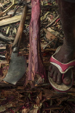 Deforestation mainly for Madgascan rosewood Axe,log,logging,wood,deforestation,forest,ground,foot,dicotyledons,fabaceae,illegal