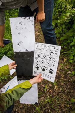 Footprint ID 1 footprint,tracking,conservation,education,public engagement,animal identification,feet,UK,paw,population,conservationist,monitoring