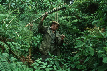 Guide clears away trap for mountain gorillas people,Africa,armed,camouflage,Central Africa,conservation,day,ranger,firearm,firearms,guard,guards,gun,guns,male,man,patrol,patrolling,patrols,rifle,security staff,weapon,weaponry,weapons,poaching,po