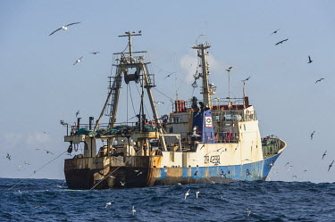 Commercial purse-seine trawler fishing in the pelagic fishing grounds Horizontal,Outdoors,Pelagic,Seabirds,South Africa,africa,cape canyon,color,commercial fisheries,day,deep sea,fisheries,fishing,marine,oceans,pelagic seabirds,pelagic trawl fisheries,southern oceans,tr