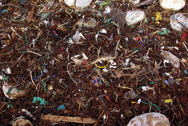 Plastic pollution on beach. Bigger plastic pieces that wash ashore are quickly ground into smaller pieces in the surf zone. close-up,trash,coast,colours,shoreline,litter,plastic,plastics,ocean trash,beach litter,marine debris,plastic waste,marine litter,microplastic