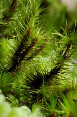 Macro shot of ferns plants,fern,close-up,macro,West Kalimantan,Sentarum,plant