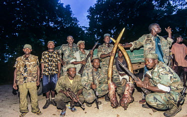 Anti-poaching team holding illegally poached elephant tusks Anti-poaching,activity,conservation action,poaching,conservation,Cites,illegal business,illegal,protection,environmental issues,ivory,trade,people,guns,tusks,rangers,Elephants,Elephantidae,Chordates,C