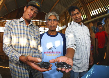 Olive ridley turtle project people,Bukit Barisan Selatan National Park,Indonesia,sea turtle project,protection,environmental issues,conservation,Reptilia,Reptiles,Turtles,Testudines,Sea Turtles,Cheloniidae,Chordates,Chordata,Ani