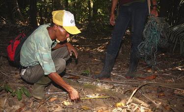 Measuring footprints of the Javan rhinoceros footprint,forest,measurement,measure,tape measure,track,Ujung Kulon National Park,conservation,people,project,forest floor,Rhinocerous,Rhinocerotidae,Chordates,Chordata,Mammalia,Mammals,Perissodactyla