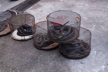 Snakes in cages at a restaurant myanmar,illicit,bushmeat,endangered,wildlife trade,m�ngla,caged,illegal wildlife trade,illegal restaurant,cage,snakes,snake,reptiles,reptile