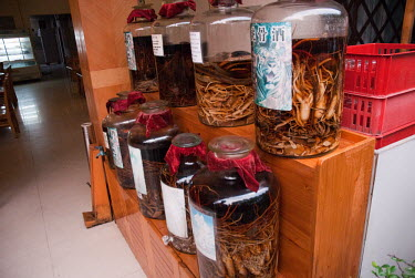 Illicit Endangered Wildlife restaurant, tiger bones and parts in jars illicit,bushmeat,endangered,wildlife trade,pickled,jars,animal parts,display,illegal wildlife trade,tiger,tigers,poaching,animal products