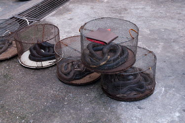 Snakes in cages at a restaurant illicit,illegal,bushmeat,endangered,wildlife trade,cage,caged,illegal wildlife trade,illegal restaurant,snakes,snake,reptile,reptiles