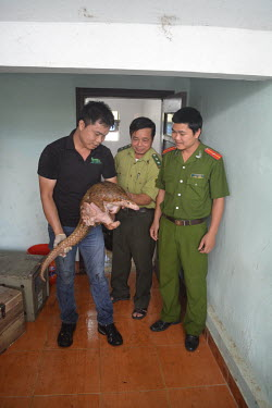 Nguyen Van Thai (SVW Executive Director) being handed the rescued pangolins from Yen Thuy District ranger and police Sunda pangolin,Sunda pangolins,pangolin,pangolins,Animalia,Chordata,Mammalia,Pholidota,Manidae,Manis,javanica,Malayan pangolin,pangolin javanais,pangolin malais,pangol�n malayo,rescue,rescued,wildlife