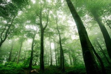Caspian jungles - Hezarajarib Protected Area Trees,jungle,tree,plants,green,dream,forest,habitat,trunk,protected areas,wild,wild habitats,natural,landscapes,natural habitat