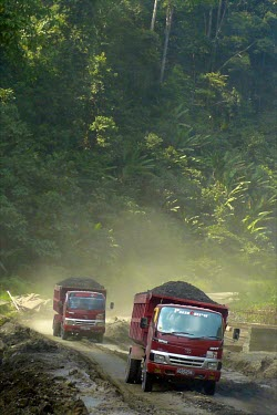 Trucks hauling coal. Mining is a land-use planning issue in this district which has declared itself a conservation area. forest,truck,mining,roads,coal,climate change,global warming,rainforests,negative space,conservation issue,conservation area,kalimantan