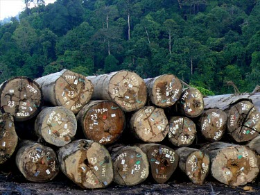 Certified timber in a log pond. Timber certification is one mechanism for ensuring sustainable forest management. timber,logs,forests,climate change,global warming,logging,certification,rainforests,juxtaposition,forest,log