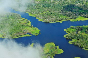 Aerial view of the Amazon Rainforest, near Manaus, the capital of the Brazilian state of Amazonas Latin America,forest,river,Amazon,aerial,forests,rainforests,green,blue,clouds,from above,cross,meeting,huts,trees,wetlands,amazon,brazil,latin america