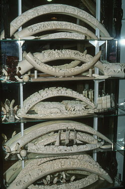 African elephant ivory for sale in curio shop Africa,Conservation,issue,issues,conservation issues,conservation issue,threat,threatened,ivory,CITES,trade,endangered species,endangered,shelves,trinkets,carved,carvings,display,case,Elephants,Elepha