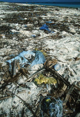 Conservation Issues: plastic pollution on the beach Africa,Conservation,issue,issues,conservation issues,conservation issue,threat,threatened,plastic,pollution,plastic pollution,beach,rubbish,litter,strand line