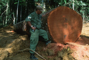 Conservation Issues: WWF International staff monitor logging operations in Gabon Africa,Conservation,issue,issues,conservation issues,conservation issue,threat,threatened,logging,logged,log,logs,rainforest,rainforests,forest,forests,export,cut,timber,tree,trees,trunk,trunks,people