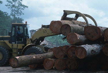 Conservation Issues: Rainforest logs being exported at logging camp Africa,Conservation,issue,issues,conservation issues,conservation issue,threat,threatened,logging,logged,log,logs,rainforest,rainforests,forest,forests,export,cut,timber,tree,trees,trunk,trunks,people