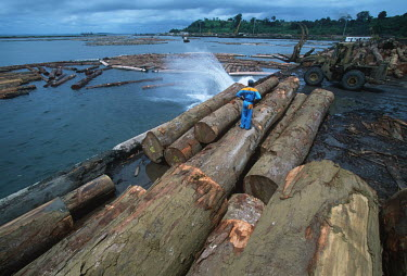 Conservation Issues: Rainforest logs await export Africa,Conservation,issue,issues,conservation issues,conservation issue,threat,threatened,logging,log,logs,rainforest,export,harbour,water,splash,store,cut,timber,tree,trees,trunk,trunks,float,floatin