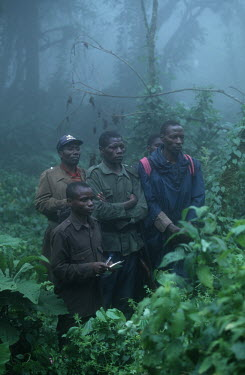 Mountain gorilla monitoring project Africa,conservation,conservation action,research,researcher,forest,rainforest,National Park,protected area,study,habitat,monitor,monitoring,watch,watching,observe,observing,mist,Chordates,Chordata,Pri
