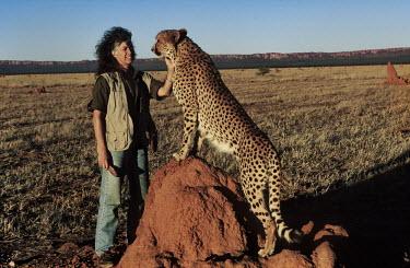 Laurie Marker, Director of The Cheetah Conservation Fund with a cheetah Africa,conservation,conservation action,research,big cat,big cats,mammals,people,rescue,Cheetah Conservation Fund,domesticated,habitat,plains,Chordates,Chordata,Carnivores,Carnivora,Mammalia,Mammals,F