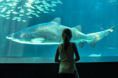Person looking at shark in aquarium African conservation photography,africa,african,color,colour,day,holiday destination,image,photo,photograph,photography,vertical,tourism,aquarium,captive,captivity,people,person,people and nature
