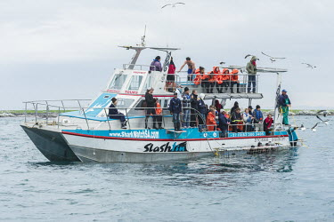 Shark watching boat with cage divers African conservation photography,Coastline,Deyer Island Conservation Trust,Horizontal,South Africa,Western Capev,africa,african,color,colour,day,deyer island,diving with sharks,extreme sports,great wh