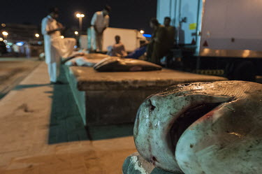 Dead sharks outside fish market African conservation photography,Dubai,Fish Market,Horizontal,Shark Finning,Sharks,United Arab Emirates,UAE,fish market,shark finning,shark fin,shark meat,illegal fishing,overfishing,africa,african,co