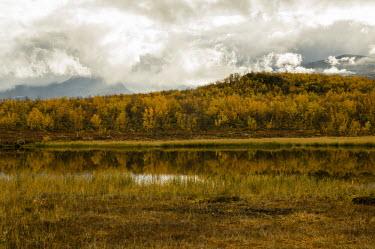 Golden landscape Abisko,Autumn,fall,Fj�ll,H�st,landscape,golden,reflection,water,clouds,trees,grass,mist,forest,landscape photography,natural habitats,Abisko_Sweden