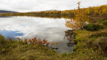 Abisko landscape Abisko,Autumn,fall,Fj�ll,H�st,landscape,golden,water,lake,still,calm,forest,riverbank,lakes,Abisko_Sweden