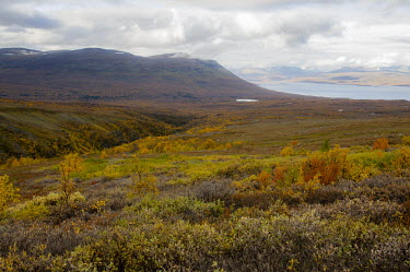 Abisko landscape Abisko,Autumn,fall,Fj�ll,H�st,landscape,Lappland,Sweden,golden,lake,mountains,colour,colourful,colorful,valley,Abisko_Sweden