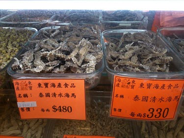 Dried seahorses for sale in medicine shop China,Chinese medicine,Traditional Chinese Medicine,medicine,medicine shop,illegal,illicit,illegal wildlife trade,wildlife trade,poaching,poached,dead,endangered species,threats,conservation threat,se