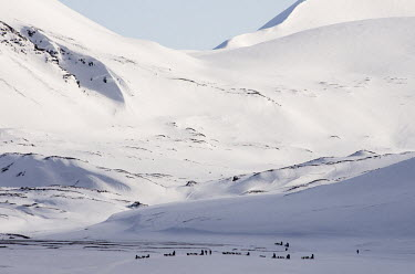 Light & Land Svalbard,Arctic,landscape,snow,light,white,snowscape,mountains,valley,people,sledges,dogs,abstract