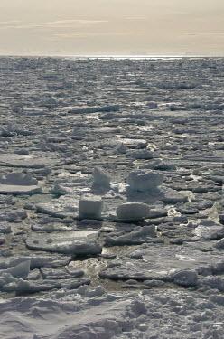 Sea ice Svalbard,sea,ocean,sea ice,ice,seascape,winter,Arctic,sun,sunshine