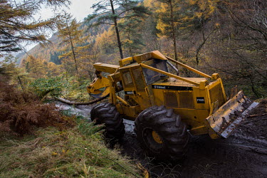 Cwmcarn Forest Cwmcarn Forest,forest,Cwmcarn,fungal disease,disease,fungus,Phytophthora ramoru,larch disease,clearing,felling,logging,larch,Larix sp.,landscape,tree,trees,infection,infected,machinery,cleared,digger,