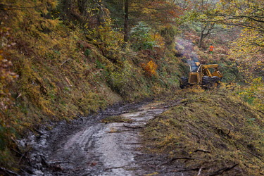 Cwmcarn Forest Cwmcarn Forest,forest,Cwmcarn,fungal disease,disease,fungus,Phytophthora ramoru,larch disease,clearing,felling,logging,larch,Larix sp.,landscape,tree,trees,infection,infected,machinery,cleared,track,a