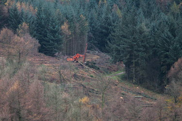 Cwmcarn Forest Cwmcarn Forest,forest,Cwmcarn,fungal disease,disease,fungus,Phytophthora ramoru,larch disease,clearing,felling,logging,larch,Larix sp.,landscape,tree,trees,infection,infected,machinery,cleared