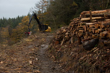 Cwmcarn Forest Cwmcarn Forest,forest,Cwmcarn,fungal disease,disease,fungus,Phytophthora ramoru,larch disease,clearing,felling,logging,larch,Larix sp.,landscape,tree,trees,infection,infected,machinery,cleared,action,