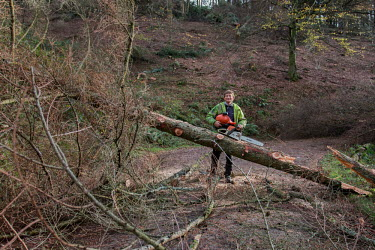 Cwmcarn Forest Cwmcarn Forest,forest,Cwmcarn,fungal disease,disease,fungus,Phytophthora ramoru,larch disease,clearing,felling,logging,larch,Larix sp.,tree,trees,infection,infected,cleared,man,people,action,work
